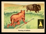 1959 Fleer Indian #16  Hunting Buffalo  Front Thumbnail
