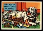 1957 Topps Isolation Booth #80   Largest Litter of Puppies Front Thumbnail
